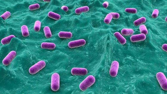 Что такое бифидобактерии?