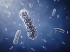Препараты, содержащие бифидобактерии и лактобактерии